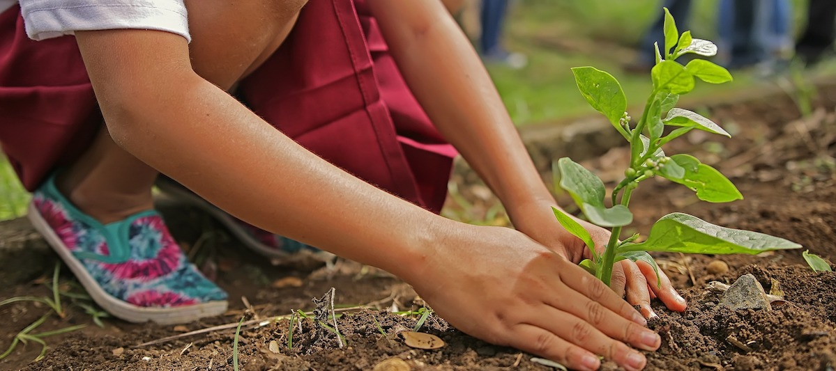 Umwelt Organisationen Plant for the Planet