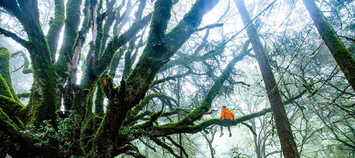 Umwelt Organisationen Robin Wood