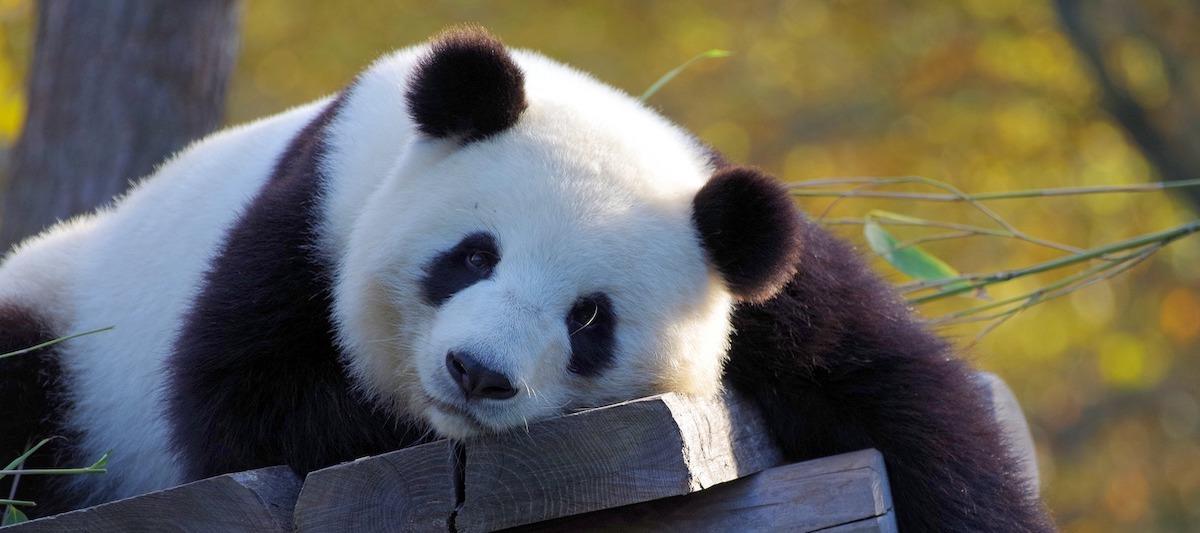 Umwelt Organisationen WWF