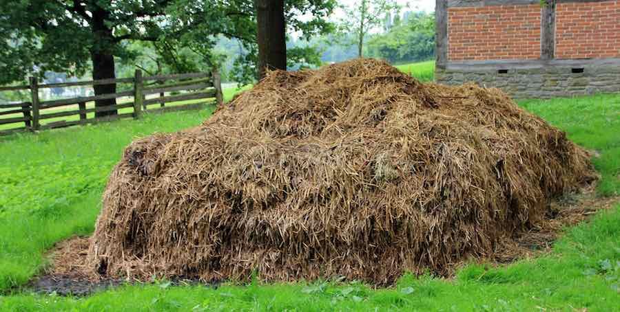 Biomasse Mist
