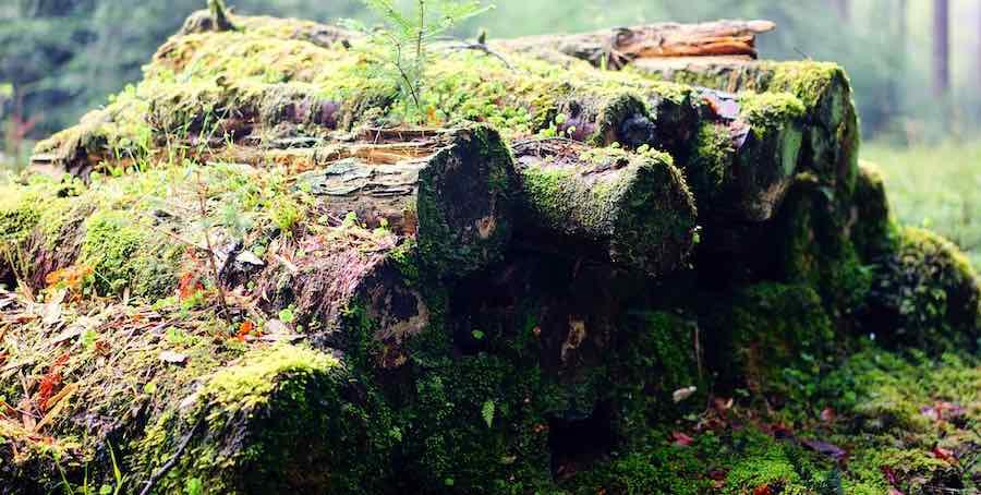 Biomassen Holz