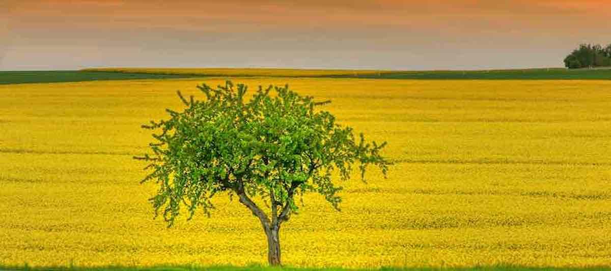 Klimaschutz, Baum
