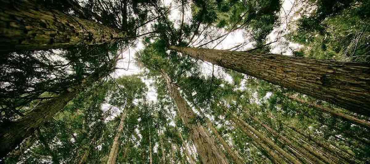 Klimaschutz Wald