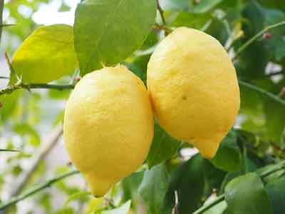Müsli selber machen Zitronen